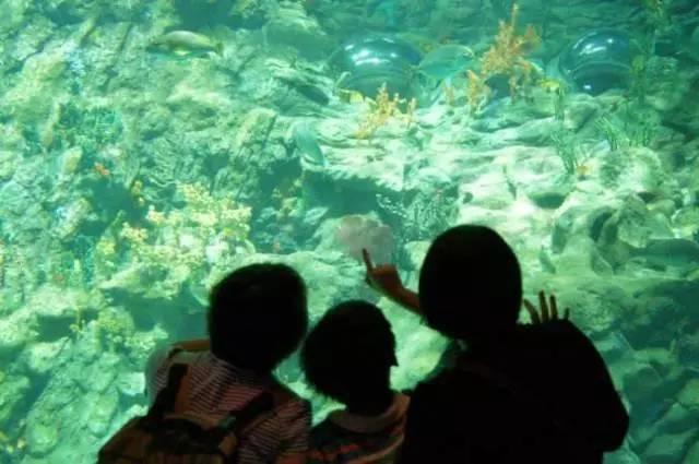 免费游贵安海洋世界啦! 贵安新天地旅游